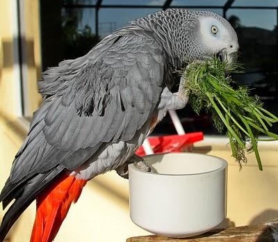 Birdeatingfennel
