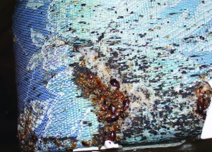 bedbugsinfestedmattress
