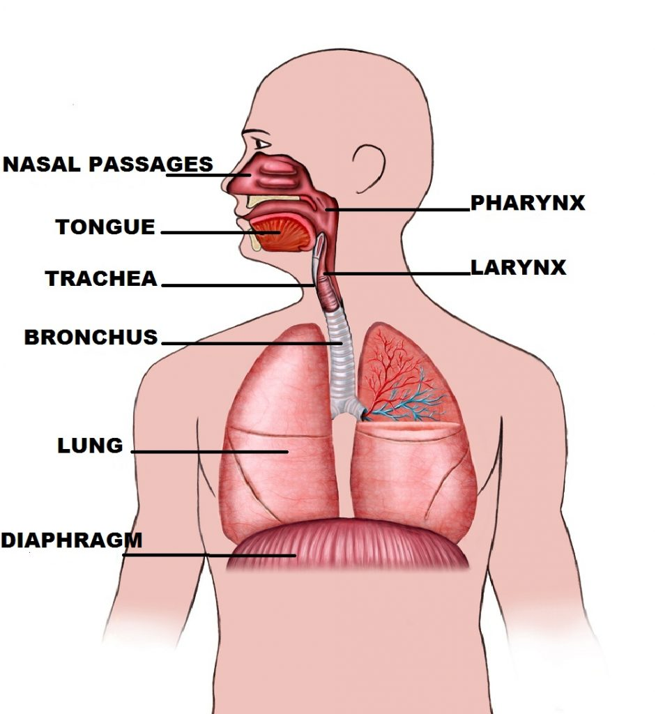 an introduction to the issue of asthma a condition of the bronchial tubes Read this essay on asthma condition  that leads to inflammation of the bronchial tubes,  asthma is a condition in which the airways of the lungs become either.