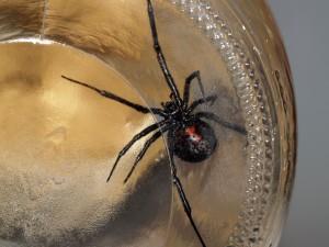 Survival Medicine Hour: Spider Bites, Heartburn, Drought, Expiration Dates