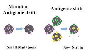 antigenicshiftdrift