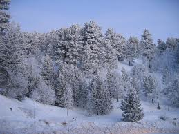 COLD WEATHER PRECAUTIONS