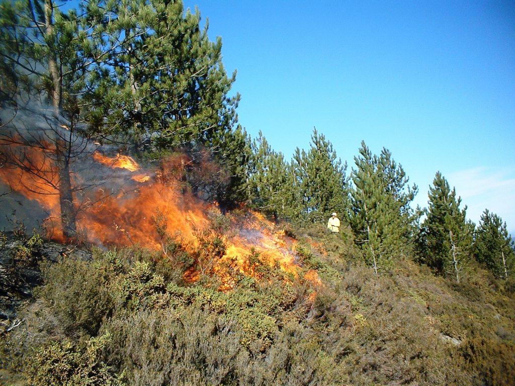 Wildfire Realities