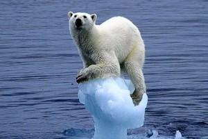 bear polar stranded