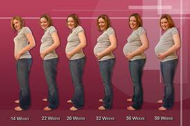 pregnancy 1