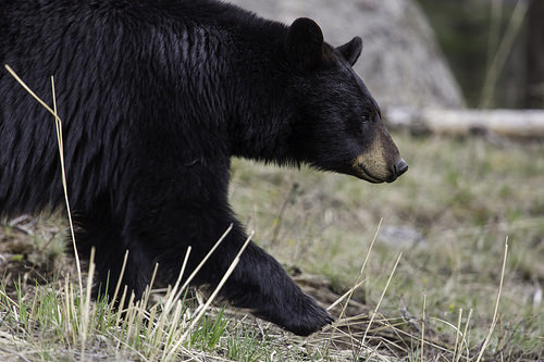 Videocast: Bear attacks, E. Coli, more
