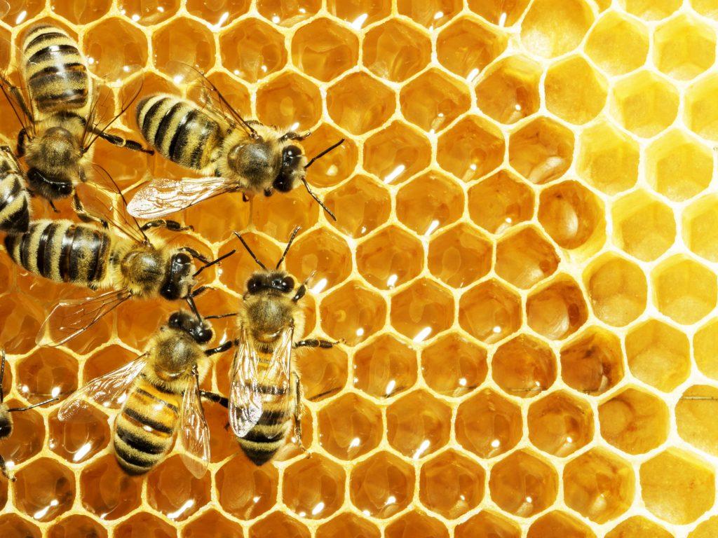 Raw Honey is Medicine!