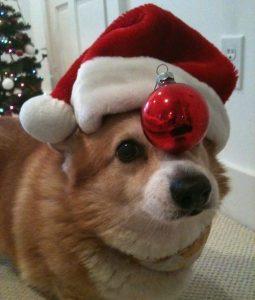 Have a Corgi Christmas!