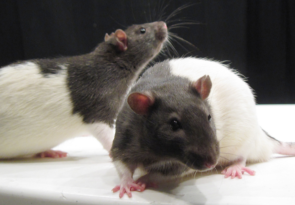 Video: Getting Rid of Rodents