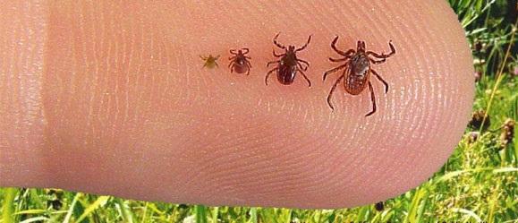 Video: Lyme Disease