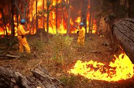 spot fires are started by windy conditions