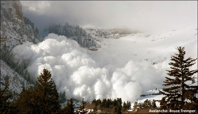 Avalanche Survival