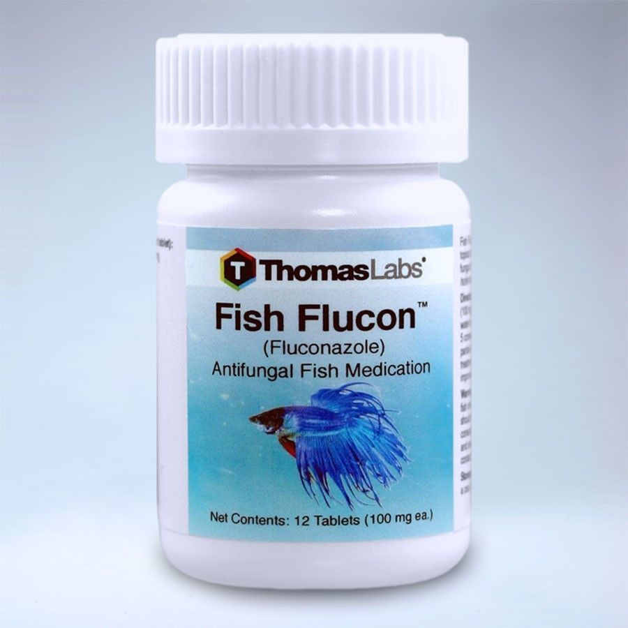 Fluconazole in Survival Settings