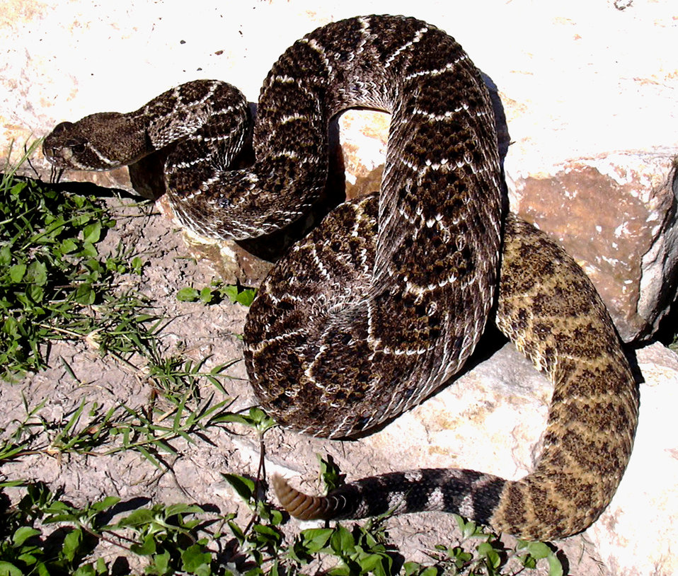 Snakebites: First Aid and Prevention