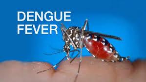 Dengue Fever in the U.S.