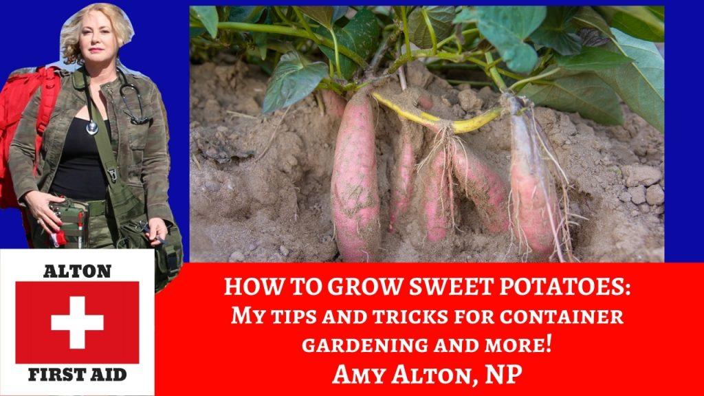 Survival Gardening: Sweet Potatoes